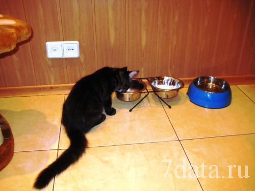 Кошачий уголок на кухне